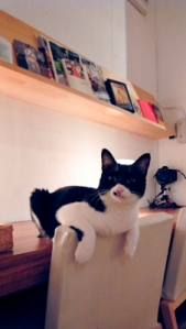 คาเฟ่แมว ร้านกาแฟที่มีแมวเยอะแยะไว้ให้คนรักแมวมาเล่น
